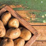 царят-на-подземието-картофът-1